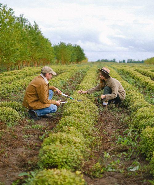 L'agriculture est un métier d'avenir qui recrute en 2021.